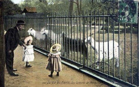 Le jardin des plantes en 1900 for Jardin animaux paris